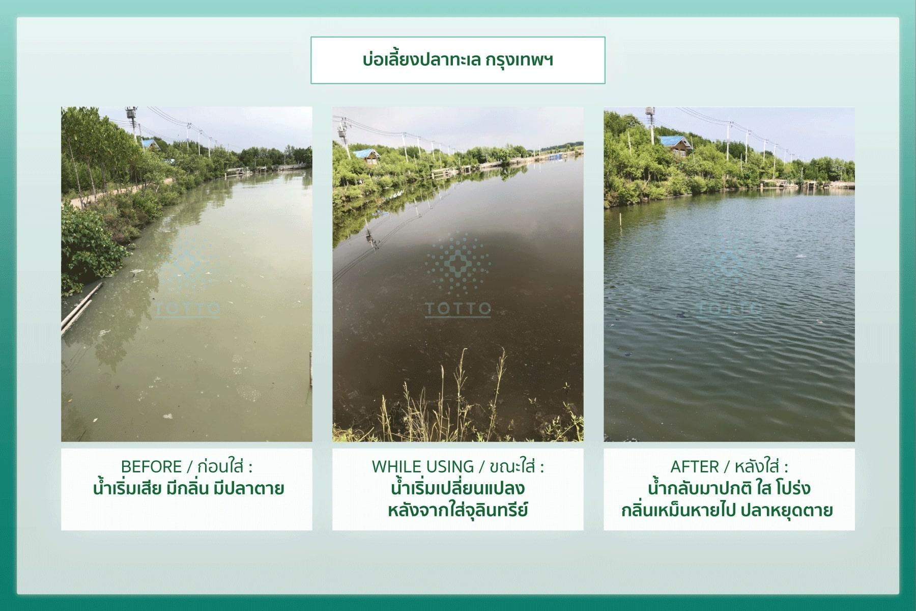 แก้น้ำเสีย,แก้นำ้เสีย,แก้น้ำเน่า,แก้นำ้เน่า,แก้น้ำเน่าเสีย,แก้นำ้เน่าเสีย,บำบัดน้ำเสีย บ่อปลา,บำบัดนำ้เสีย บ่อปลา